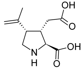 Kainate receptor - Kainic acid