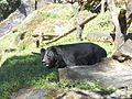 Kanchendzonga National Park, Sikkim.jpg