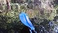 Kayak Eno River Hillsborough NC 161644 (24389426787).jpg