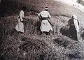 Khalil Raad, Harvest.jpg