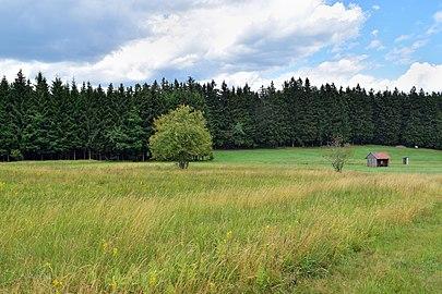 Kirchschlag - Naturschutzgebiet n065 - Kammerschlager Flachmoorwiese.jpg