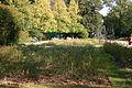 Klettenbergpark Rosengarten 6.jpg