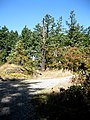 Knockan Hill Park wildlife tree. READ INFO IN PANORAMIO-COMMENTS - panoramio.jpg