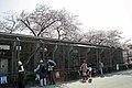 Kobe oji zoo 2009 April 04.jpg