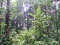 Korbu Deep Jungle.JPG