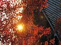 Kyoto Autumn Leaf.JPG