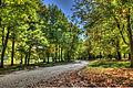 L'automne au Québec (8072598228).jpg