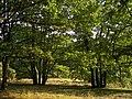 Lüneburger Heide 011.jpg