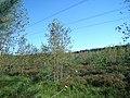 Līksna Parish, LV-5456, Latvia - panoramio - BirdsEyeLV (4).jpg