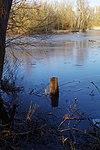 LSG H 00070 Calenberger Leinetal - Teich an der Calenburg (14).jpg