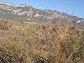 La serra de Queralt des de la serra de Noet DSCN3843.jpg
