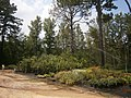 Lamar County, MS, USA - panoramio (2).jpg