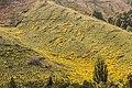 Landscape in Tasman Region 03.jpg