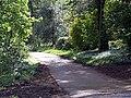 Lane through woods near Trewarthenick - geograph.org.uk - 412776.jpg