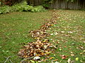 Leaf collection in a garden.jpg