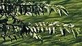 Leaves I IMG 3263.jpg