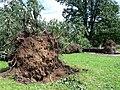 Legnica city park afterm tornado.jpg