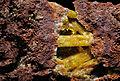 Legrandite, limonite, adamite 300-4-FS2014.jpg