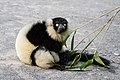 Lemur (27618373058).jpg