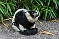 Lemur (36276382093).jpg