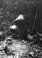 Lerkärl tätas av kvinna med harts invändigt. Rio Pasutó, Chocó, Colombia - SMVK - 004343.tif
