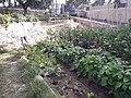 Les jardins partagés Rakrouki ville de Sète.jpg