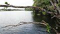 Liberia, Africa - panoramio (289).jpg