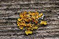 Lichen (42166089304).jpg