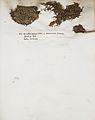 Lichenes Helvetici IX X 1833 007.jpg