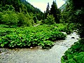 Liro verde - panoramio.jpg