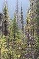Little Yoho Valley IMG 4889.JPG