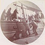 Loading Reindeer on U.S.S. Bear, c.1896.jpg