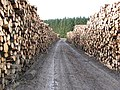 Logging and road - geograph.org.uk - 324238.jpg
