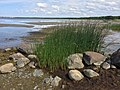 Loksa-Hara, Hara, 74810 Harju maakond, Estonia - panoramio - Николай Семёнов (3).jpg