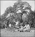 London Parks- Entertainment and Relaxation in the Heart of the City, London, England, 1943 D15933.jpg