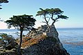 Lone Cypress on a sunny day.jpg