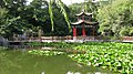 Lotus pool of Jin Jiang Park - panoramio.jpg