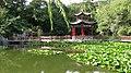 Lotus pool of Jin Jiang Park - panoramio.jpg