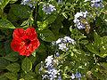Lower barrakka gardens-IMG 1626.jpg