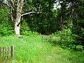 Lubiewice, old evang. cemetery (3).jpg