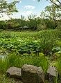 Lydon daejeon-arboretum-lagoon.jpg