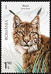Lynx-Lynx-lynx.jpg