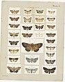 MA I437609 TePapa Plate-X-The-butterflies full.jpg