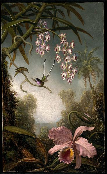File:MJ Heade Orchids and Spray Orchids with Hummingbird.jpg