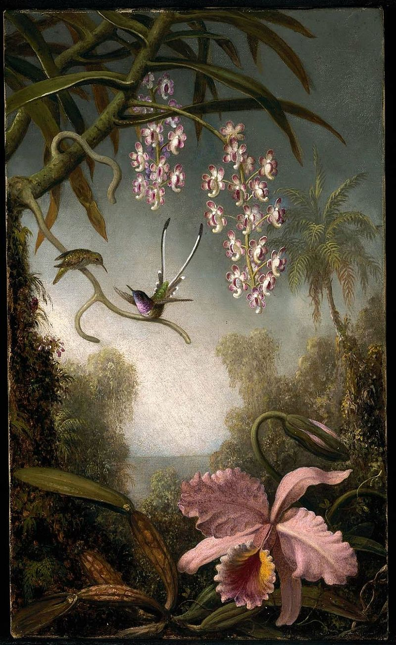 MJ Heade Orchids and Spray Orchids with Hummingbird.jpg