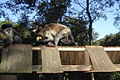 Macaco prego em Tibaji 260708 REFON 6.JPG