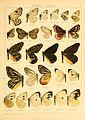 Macrolepidoptera01seitz 0045.jpg