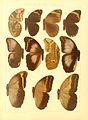 Macrolepidoptera15seit 0137.jpg