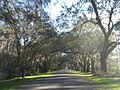 Magnolia Plantation and Gardens - Charleston, South Carolina (8556465034).jpg