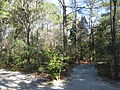 Magnolia Plantation and Gardens - Charleston, South Carolina (8556554346).jpg